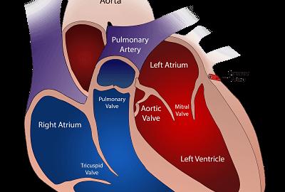 Heart transplant, innovations, scarcity