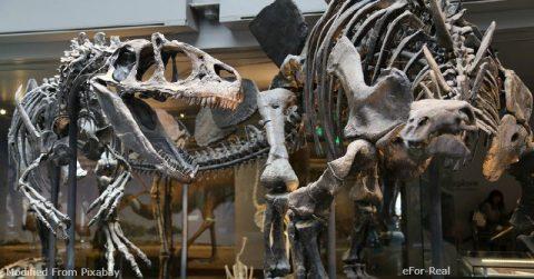 Kt extinction, Dinosaur extinction, Cretaceous extinction, Dinosaurs, Asteroids, K-Pg boundary, Extinction