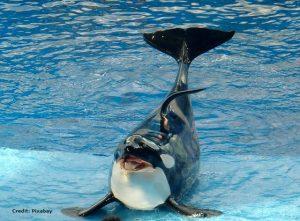 Whale, Orca, Animal, Orangutan, Parrot, Lyrebird, Seal, Elephant, Human voice, Speech, Speak, Animal Speaking, Animal Talking