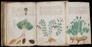 Voynich Manuscript, Archaeology