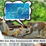 Animal, nature, math