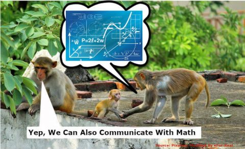Animal, nature, math