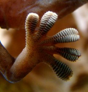 Adhesive Technology, Gecko feet