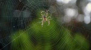 Spider, Spider's web, Tape Design, Flying device, weather sensor