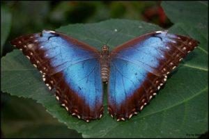Mirasol, butterfly, eReader Screen