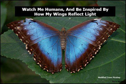 Nature inspired, animal inspired, plant inspired, Innovations, Technology, Inspiration