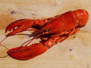 Lobster, flexible body amour, tire, garden hose