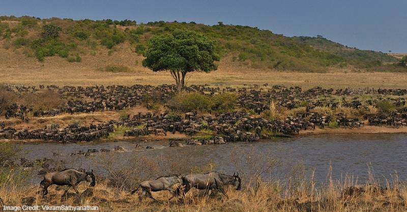 Kenya tourist attractions, Tourist attractions in Kenya, Tourist attractions near me in Kenya, Africa tourist attractions, Tourist attractions in Africa, Tourist attractions near me in Africa