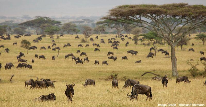 Serengeti National Park, Kenya tourist attractions, tourist attractions in Kenya Tourist attractions near me in Kenya, Tanzania tourist attractions, Tourist attractions in Tanzania, Tourist attractions near me in Tanzania, Africa tourist attractions, Tourist attractions in Africa, Tourist attractions near me in Africa